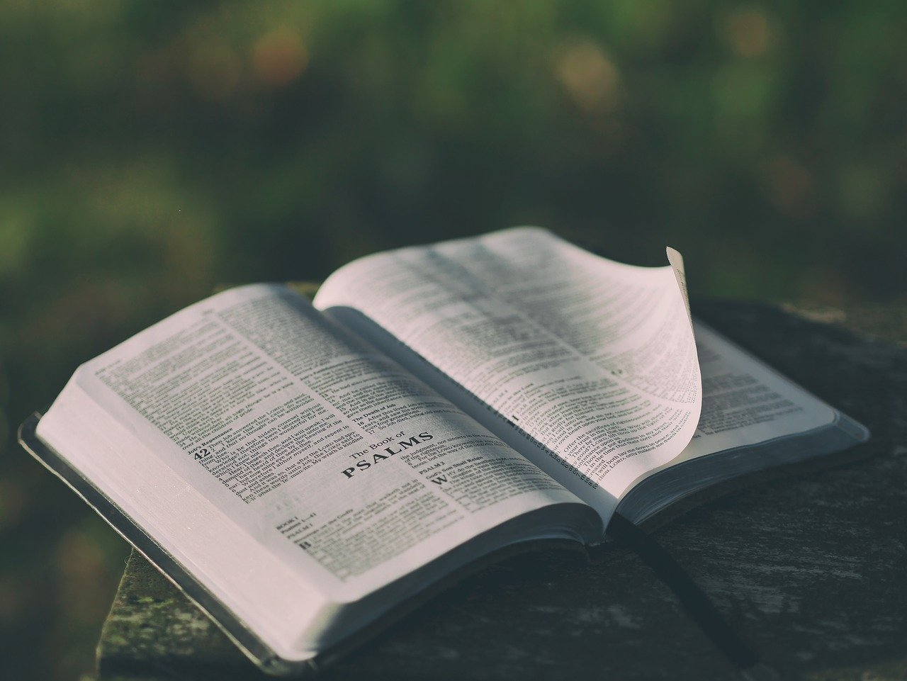 Read more about the article Growing in the Knowledge of God